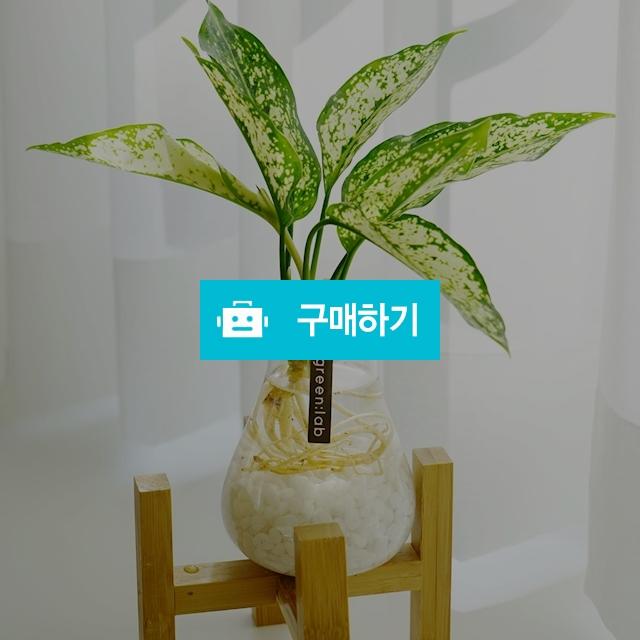 스노우사파이어 DIY SET 반려식물 공기정화식물 / 바로플라워 / 디비디비 / 구매하기 / 특가할인