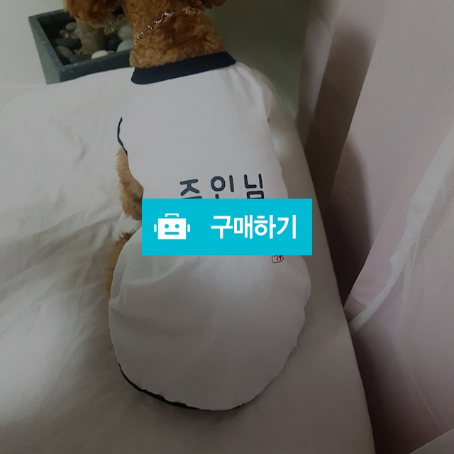 강아지 실내복 잠옷 내복 / 롱데이샵 / 디비디비 / 구매하기 / 특가할인