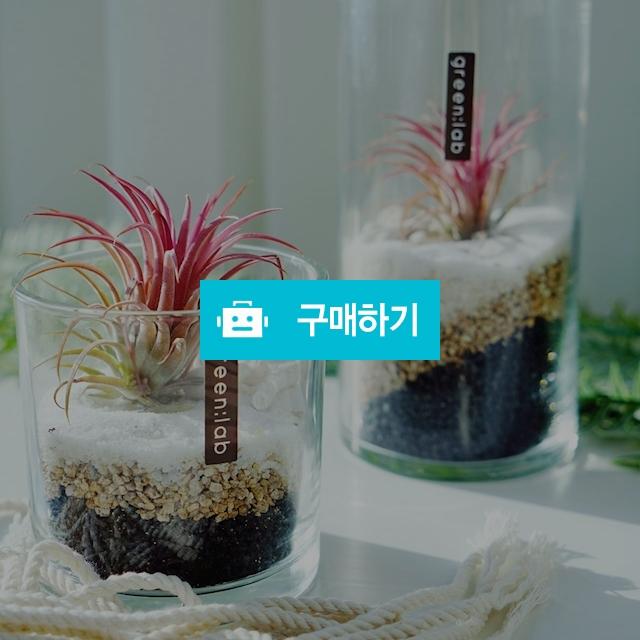 틸란드시아 DIY SET 반려식물 공기정화식물 / 바로플라워D님의 스토어 / 디비디비 / 구매하기 / 특가할인