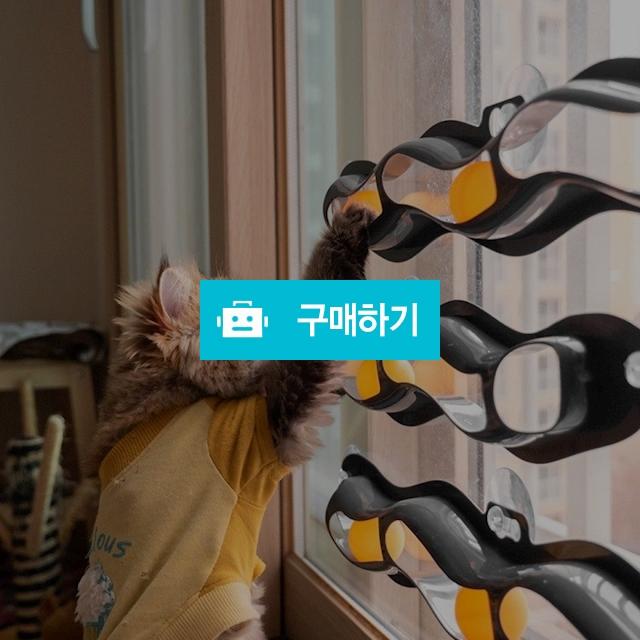 냥캣 트랙볼 고양이 셀프 장난감 고양이놀이터 고양이공놀이 / 댕유마켓님의 스토어 / 디비디비 / 구매하기 / 특가할인