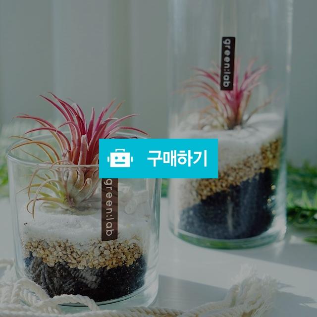 틸란드시아 DIY SET 반려식물 공기정화식물 / 바로플라워 / 디비디비 / 구매하기 / 특가할인