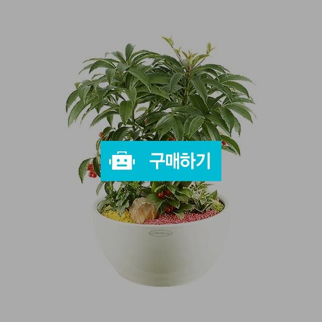 만냥금 [oz09_002] 축하 개업선물 관엽화분 / 바로플라워 / 디비디비 / 구매하기 / 특가할인