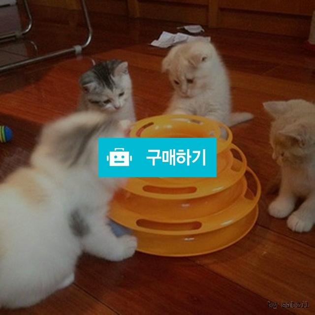고양이 빙글빙글 UFO캣토이 셀프장난감 불안해소 흥미유발 고양이공놀이 / 댕유마켓님의 스토어 / 디비디비 / 구매하기 / 특가할인