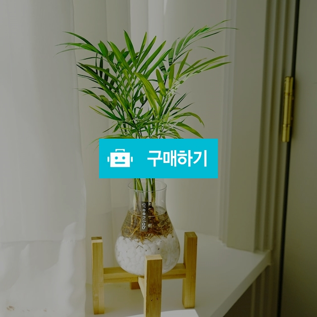 테이블야자 DIY SET 반려식물 공기정화식물 / 바로플라워D님의 스토어 / 디비디비 / 구매하기 / 특가할인