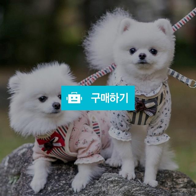 미즈펫 강아지 하네스 리본 / 지앤비스토어님의 스토어 / 디비디비 / 구매하기 / 특가할인