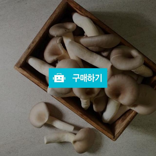 무농약 느타리버섯 1kg / 버섯을키우다 / 디비디비 / 구매하기 / 특가할인
