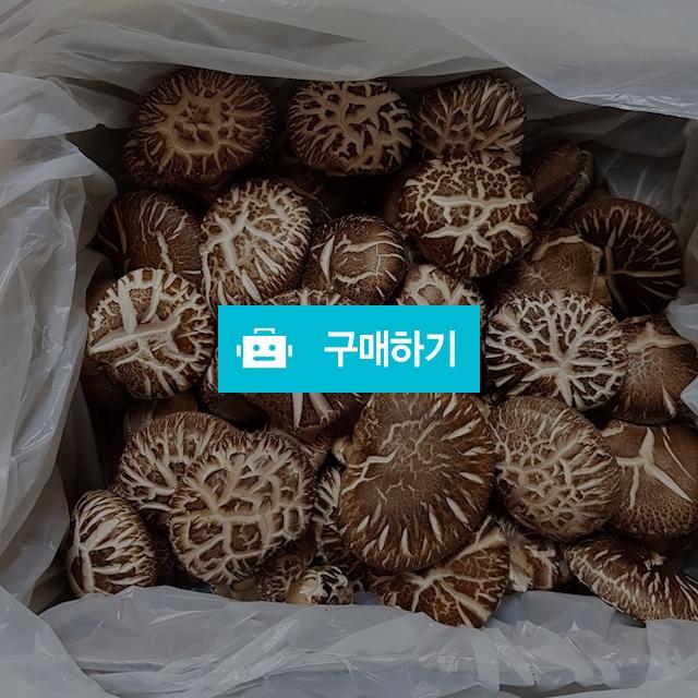 참나무 원목 생표고버섯 / 아람668님의 스토어 / 디비디비 / 구매하기 / 특가할인