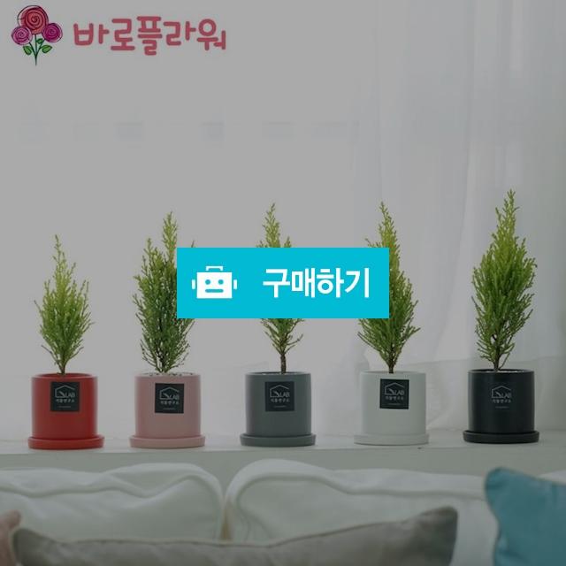 미니율마 반려식물 미세먼지식물 공기정화식물  / 바로플라워 / 디비디비 / 구매하기 / 특가할인