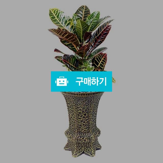 크로톤 개업선물 공기정화식물 관엽식물 당일배송 [oz09_009] / 바로플라워D님의 스토어 / 디비디비 / 구매하기 / 특가할인