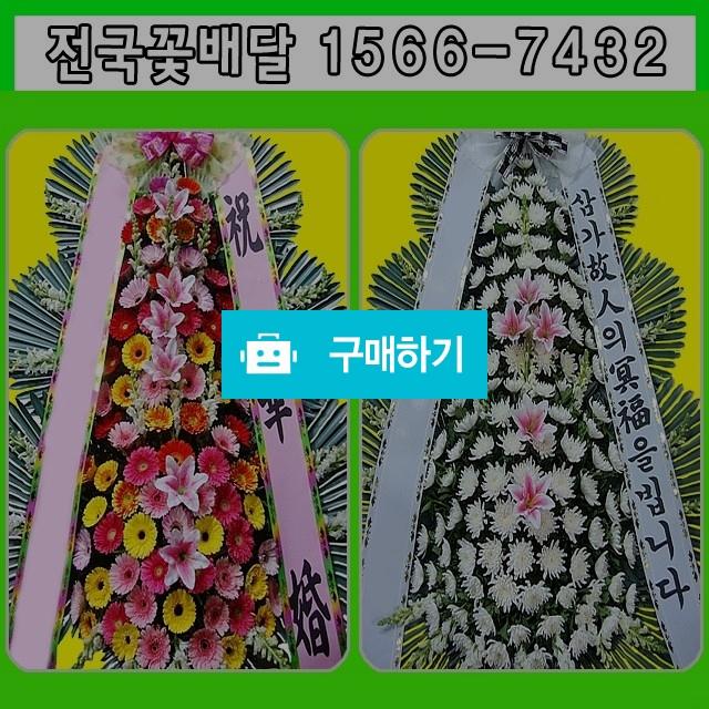 근조화환 결혼 축하 개업 꽃배달 / 070플라워님의 스토어 / 디비디비 / 구매하기 / 특가할인
