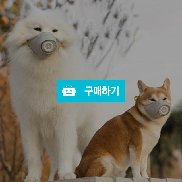 KN95 고양이마스크 강아지마스크 황사 미세먼지마스크 펫마스크(3개입) / 댕유마켓님의 스토어 / 디비디비 / 구매하기 / 특가할인
