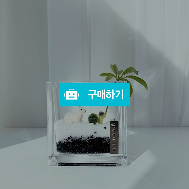 마리모 DIY SET 반려식물 공기정화식물 / 바로플라워 / 디비디비 / 구매하기 / 특가할인